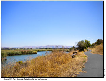 Coyote Hills: Bayview Trail  alongside the main marsh